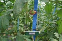 科技结合农业物联网,足不出户实现