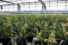 农业物联网在兰花种植中的综合利用